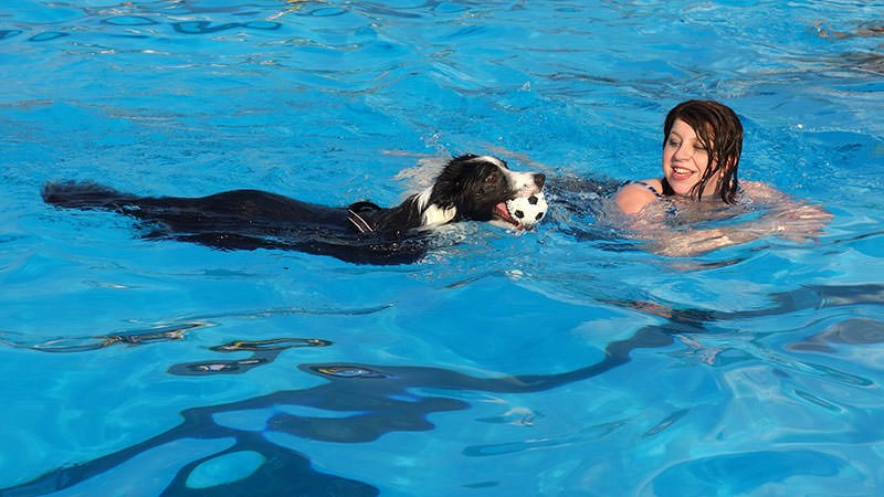 Teach pets to swim